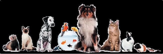 Zoomax24 – twój sklep dla zwierzaków na maxa!